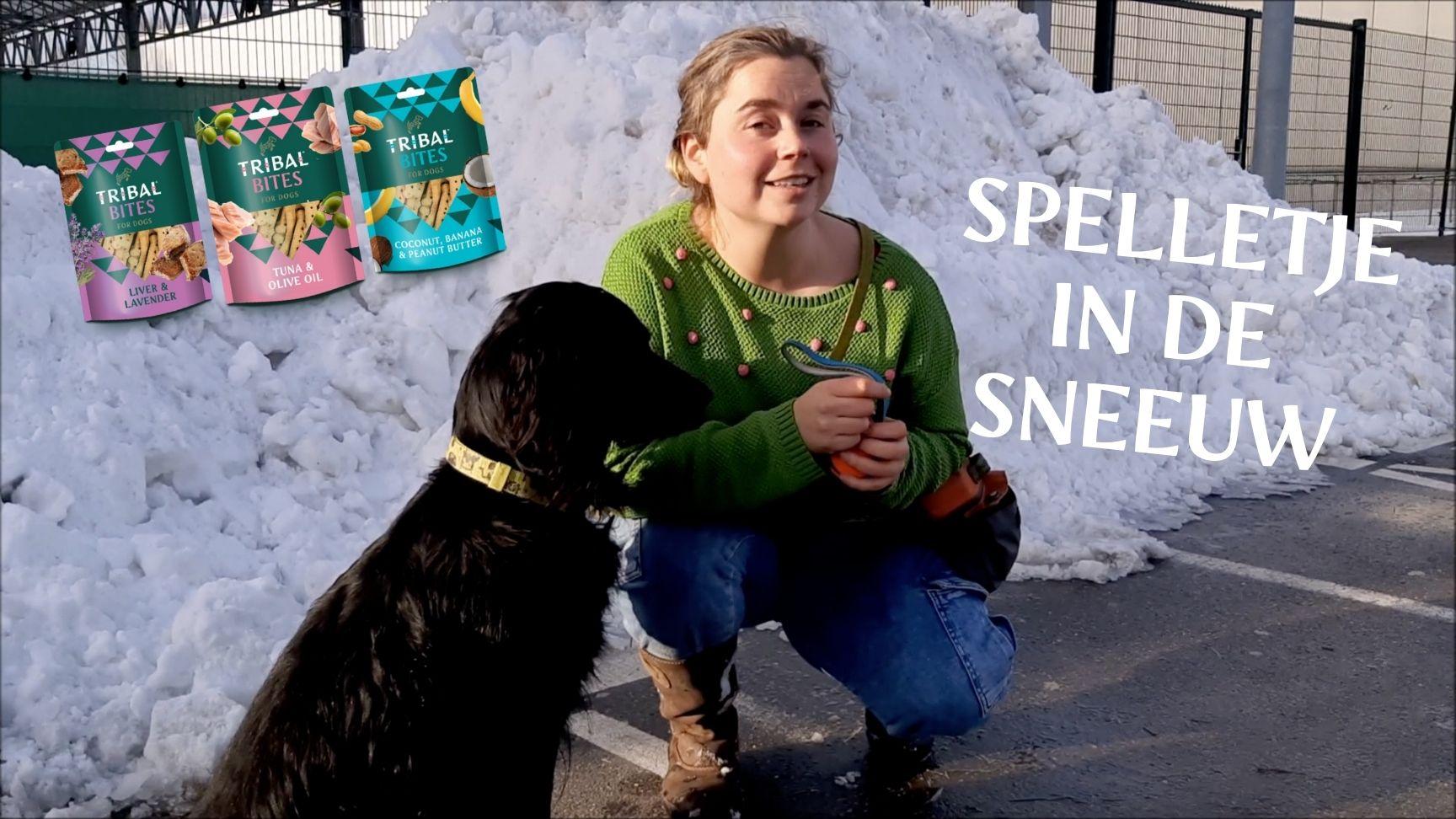 zoekspel sneeuw hond tribal rewards