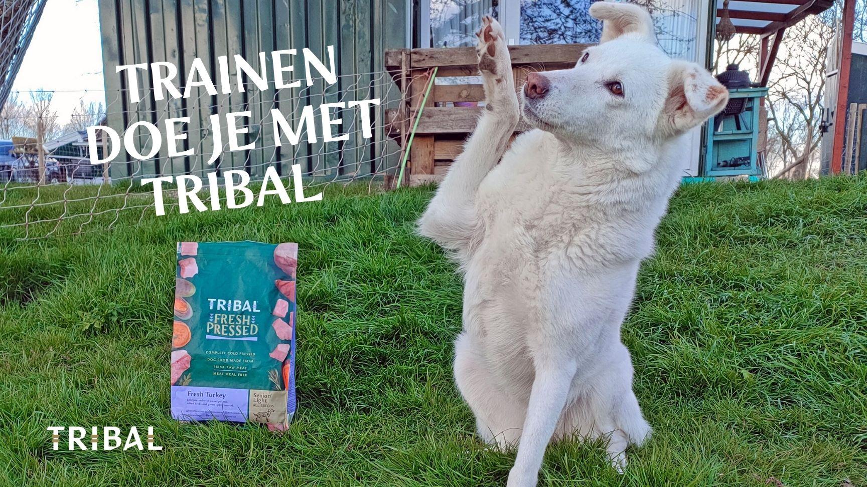 Train hond Tribal hondenvoeding